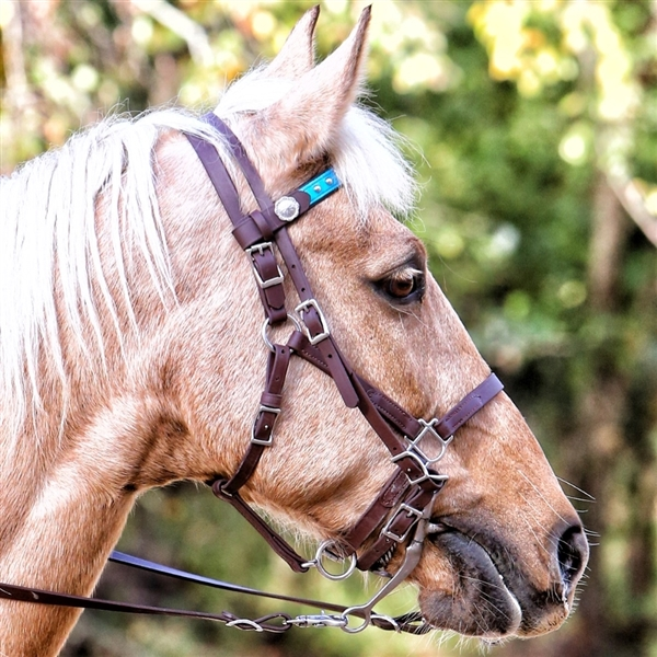 BioThane Halter Bridle Add-a-Bridle in Chocolate Brown or Black Beta. EZ Change Changeable Browband. Horse Shoe Embossed Western Buckles with Concho Covered Snaps.   All hardware is Stainless Steel.