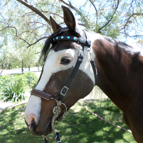 BioThane Western Bridle with snap at Throatlatch in Beta. Horse Shoe Embossed Western Buckles with Bridle Loop Conchos are included.  All hardware is Stainless Steel. Shown with  EZ Change Browbands available for optional purchase. Colors