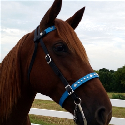 BioThane Beta Noseband Bridle in Black, Brown and Colors. EZ Change Browband. Changeable noseband. Stainless Steel Fittings, Roller Buckles & Browband Snaps.  Bling is an optional addition