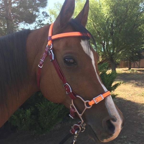 BioThane Beta Endurance Bridle. Roller Buckles. Conway Buckles to the bit reduce bulk and weight or choose roller buckle. All hardware is Stainless Steel. Colors. Ready for your Hackamore. Noseband sold separately.