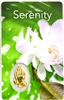 Serenity Holy Card with Medal C144