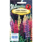 Beautiful perennial variety with flowers in wide colour range. This is a mixture of colours ideal for borders and flowerbeds. An excellent cut flower.