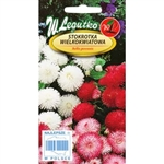 Bedding plant with flowers in bright colours as white, pink and red looks amazing in containers.