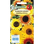 Tall mixture of single flowered Sunflowers in wide range of colours from lemon-yellow to brown-red. Worth place in every garden. Ideal for growing in a large clump and superb as a cut flower. One of the easiest plants to grow.