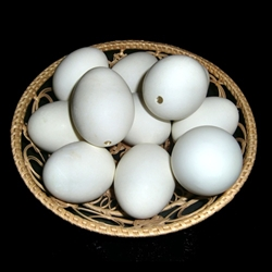 Duck egg shell with one hole located in the large end. These eggs are unwashed, straight from the farm! They are larger than a standard chicken egg.