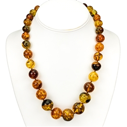 Multi-shades on beautiful amber rounded beads are highlighted in this graduated string. Beads vary from 1 - 2 cm in diameter.