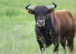 Bull Eating Grass Birthday Card