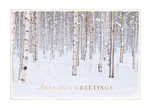 Birch Trees in Winter Holiday Greetings Card