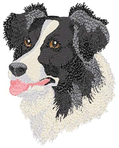 Border Collie  Head Panel Insert