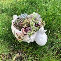 Unicorn Bowl To Go Pack $35