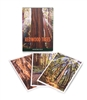 Notecard Folio - Redwood Trees