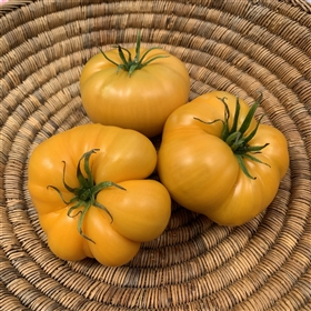Aunt Gertie's Gold - Organic Heirloom Tomato Seeds