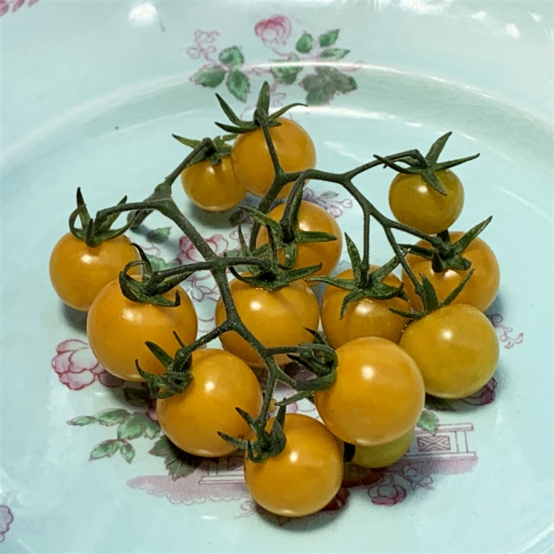 yellow cherry tomatoes - photo #9