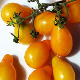 Beam's Yellow Pear Tomato