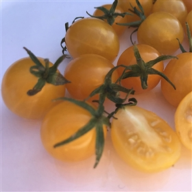 Blondkopfchen Heirloom Tomato