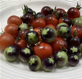 Blue Berries -Tomato