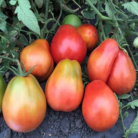 Buffalo Heart - Heirloom Tomato Seeds
