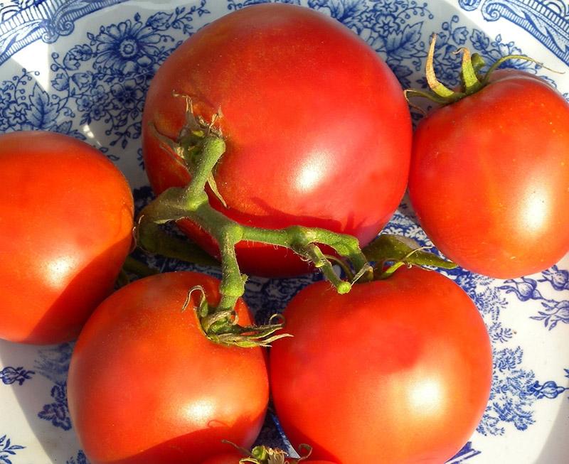Grosse Lisse Organic Heirloom Tomato Seeds Tomatofest