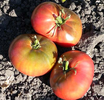 Indian Stripe-Tomato