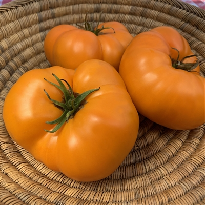 Orlov Yellow Giant Heirloom Tomato