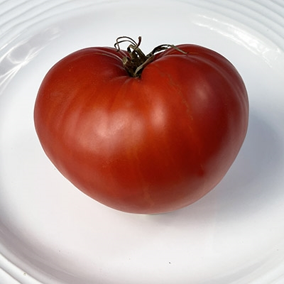 Sunset's Red Horizon Heirloom Tomato