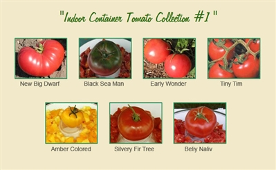 Indoor Container Tomato Collection #1