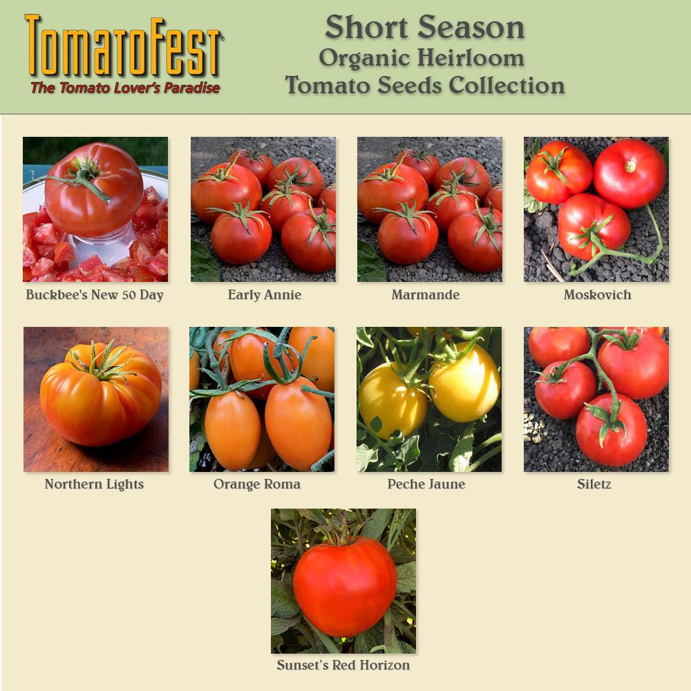 Short Season Tomato Seed Collection