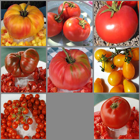 Tropical Hot/Humid Tomato Seed Collection