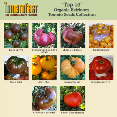 """TOP 10"" Heirloom Tomatoes Seed Collection"