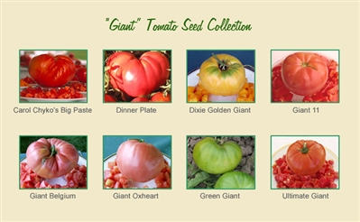 Giant Tomato Seed Collection