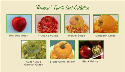 Rainbow Tomato Seed Collection
