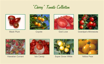 Cherry Tomato Seed Collection