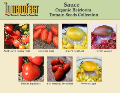 Sauce Tomato Seed Collection