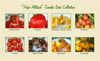 High-Altitude Tomato Seed Collection