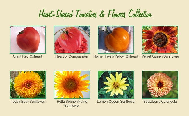 Hearts & Flowers Tomato and Flower Seed Collection