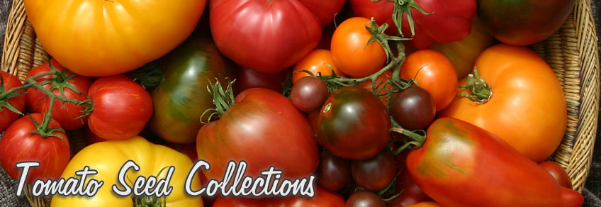 Tomato Seeds Collections Of Special