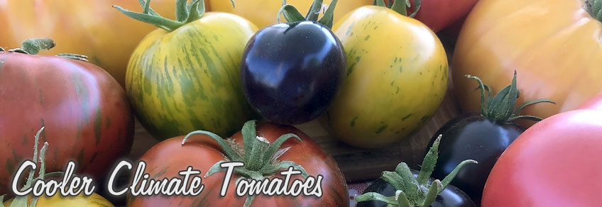 Tomato Varieties for Cooler Climates