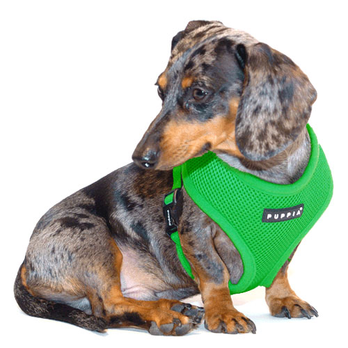 Grass Green Puppia Harness