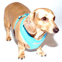 Dotty Blue Puppia Harness
