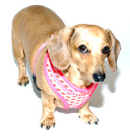 Pink Lattice Puppia Harness