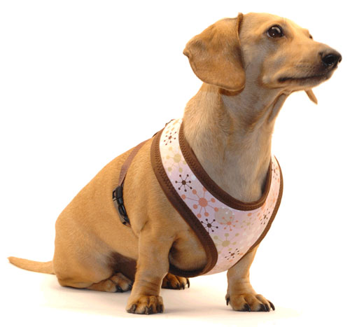 Pink Jacks Cushion-Fit Dachshund Harness