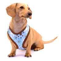 Blue Jacks Cushion-Fit Dachshund Harness