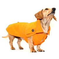 Tangerine Orange Dachshund Trenchcoat