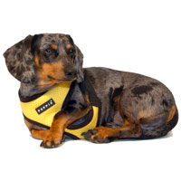 Sunshine Yellow Puppia Harness