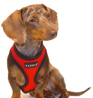 Cherry Red Puppia Harness
