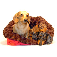 Chocolate and Berry Dachshund Bed