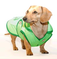 Lime Sorbet Dachshund Raincoat