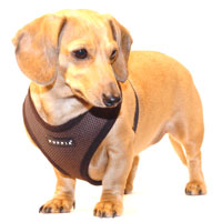 Chocolate Brown Puppia Harness
