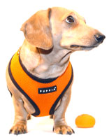Bright Orange Puppia Harness