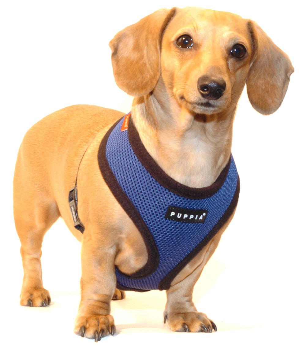 Navy Blue Puppia Harness
